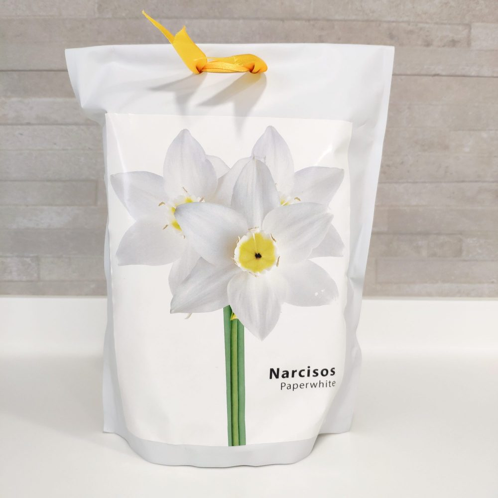Kit de cultivo Narciso papperwhite