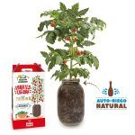 Kit cultivo interior tomate cherry